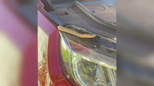 Cobra sumiu: Corpo de Bombeiros não encontra réptil que estava dentro de carro