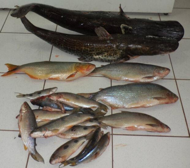 Pescador é autuado com 50 kg de pesca ilegal