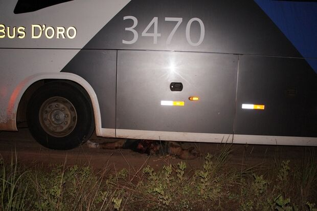 Motorista mata amigo esmagado com ônibus pegado sem permissão
