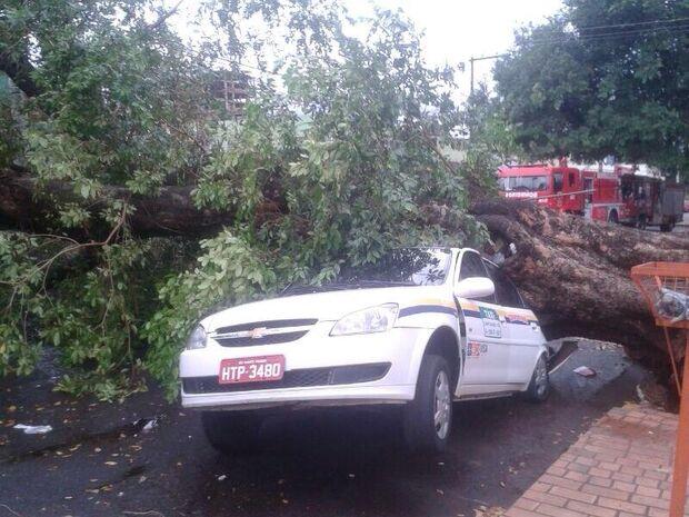 Árvore cai com a chuva e destrói taxi