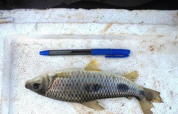 PMA apreende pescadores em fiscalização no rio Paraná