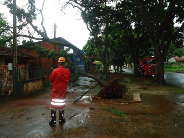 Ventos de 90 Km/h derrubam árvores e destelham casas