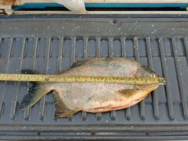 PMA prende turistas que capturaram 80 kg de pescado na região norte do Estado