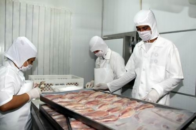 Frigorífico de peixes em Aparecida do Taboado inicia formação de banco de currículos