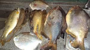 PMA exigirá licença do Estado para a pesca em rios de Mato Grosso do Sul