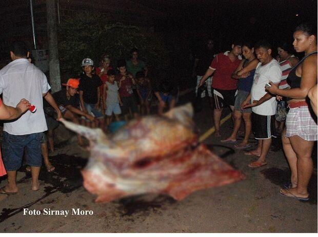 Taxista atropela vaca e populares carneiam o animal no meio da rua em Aquidauana