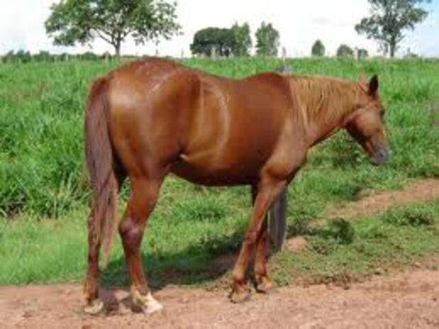 Jovens são flagrados pela Polícia após roubarem um cavalo em Taquarussu