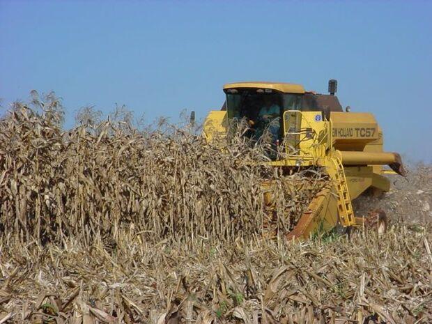 Colheita de grãos em MS será 3% maior
