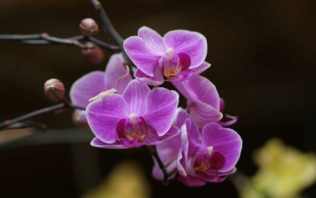 Profissionais de Jaraguari recebem capacitação para o cultivo de orquídeas