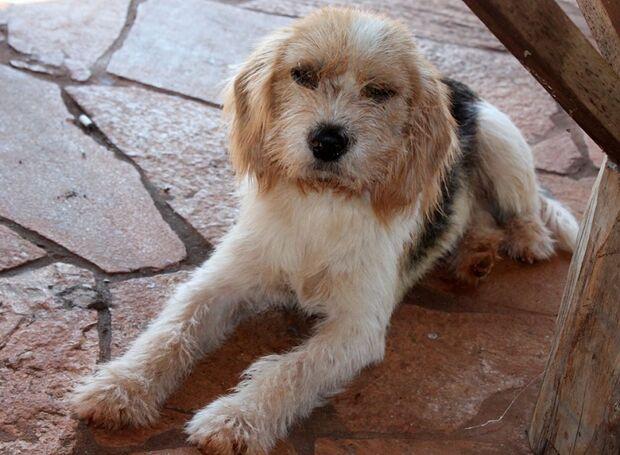 Projeto aposta em adestramento de cães abandonados para promover acessibilidade de deficientes visua