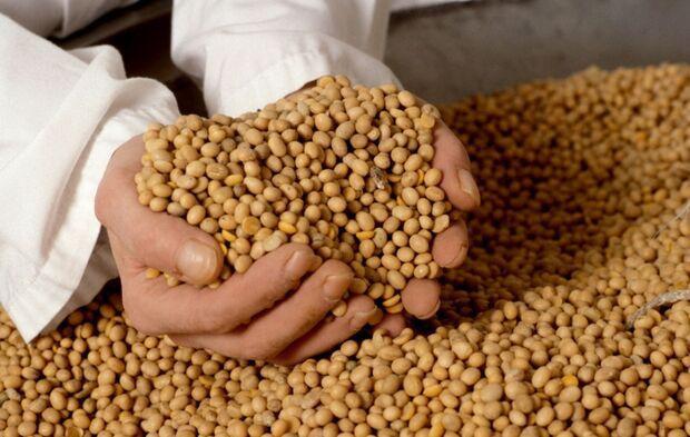 Safra de grãos deve chegar a 195,9 milhões de toneladas, estima Conab