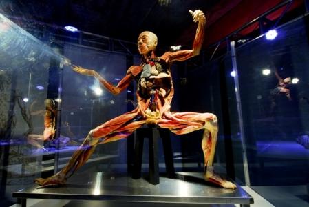 Exposição Human Bodies fica até o dia 17 deste mês em Campo Grande