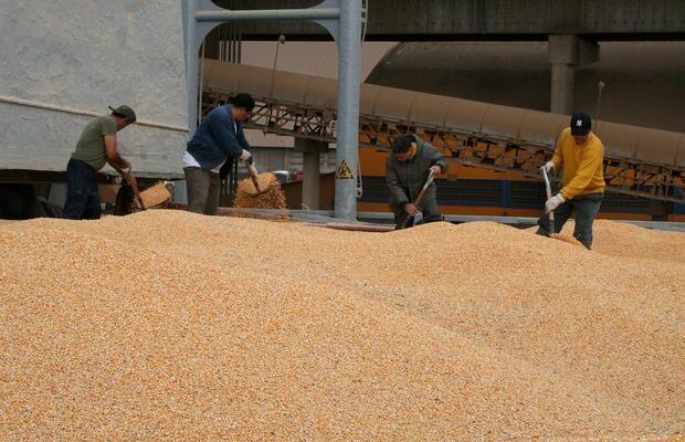 Brasil bate recorde nas exportações de milho e já soma quase 21 milhões de toneladas