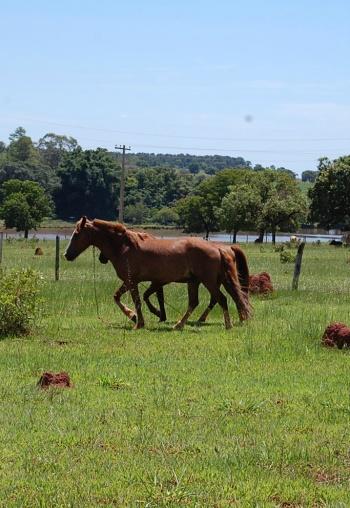 Adolescente é apreendido após furtar cavalos de sítio