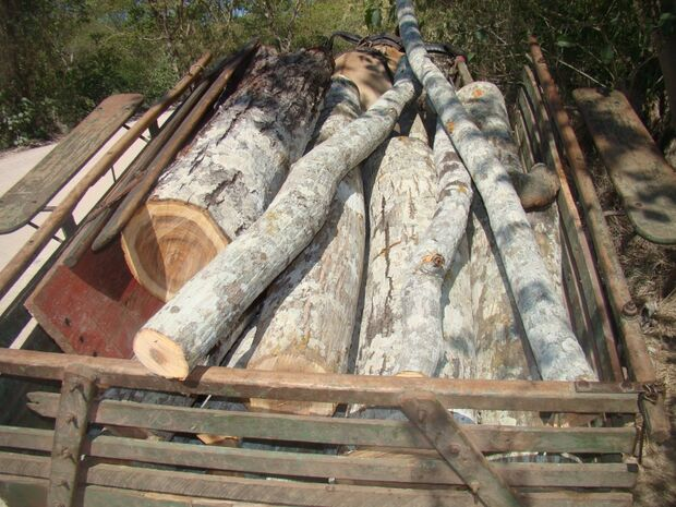 PMA apreende madeira ilegal em MS