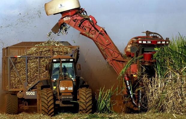 Processamento de cana-de-açúcar registra 39 milhões de toneladas em outubro