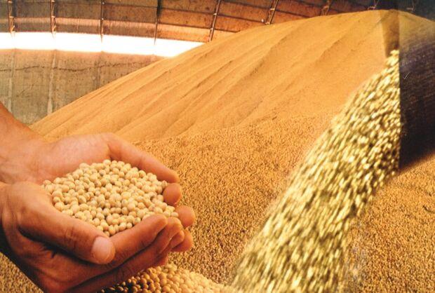Em Goiás, seca gera prejuízo de R$ 1,3 bilhão aos sojicultores
