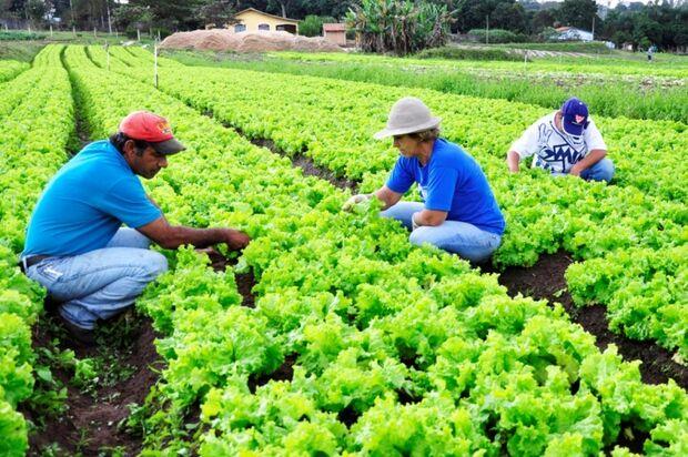 Governo lança em dezembro Plano de Desenvolvimento Rural Sustentável