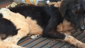 Por bater em cão com pedaço de pau, homem é detido e multado em R$ 500