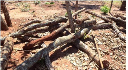 PMA autua assentados de Nova Andradina por desmatamento