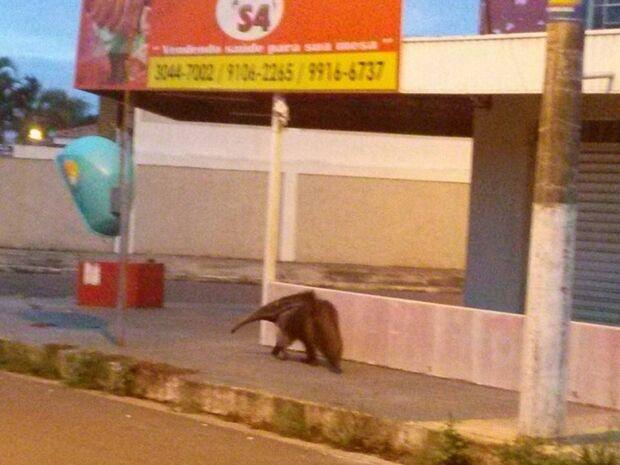 O animal desfilava tranquilamente pelas ruas do bairro