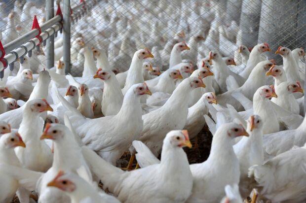 Gripe aviária H7N9 avança e exige vigilância constante