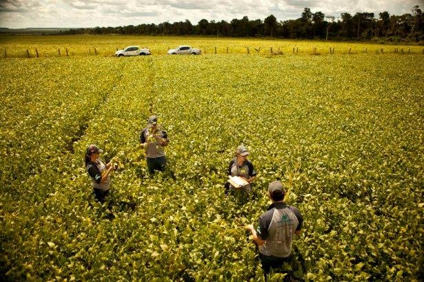 Equipes do Rally da Safra avaliarão colheita da soja precoce em MS