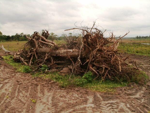 Fazendeiro de Rio Verde é autuado em R$26 mil por desmatamento ilegal
