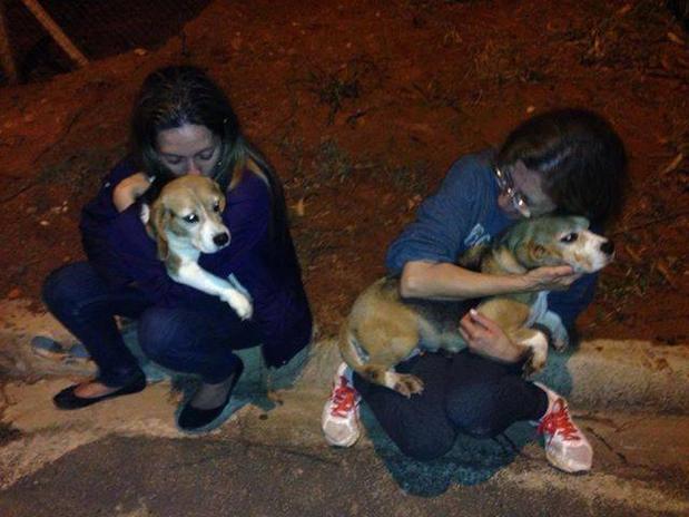 Perícia não constata indícios de maus tratos a animais em instituto