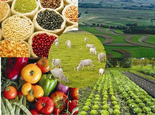 Valor de produção agropecuária em 2014 deve somar R$ 440 bilhões