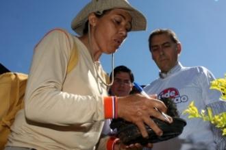 Índice de notificação da dengue cai na Capital em relação a 2013