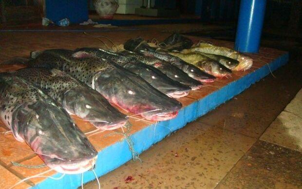PMA apreende 79kg de pescado do rio Aquidauana