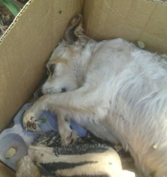 Mesmo sem denúncia formal, Decat investiga local de 'desova' de animais