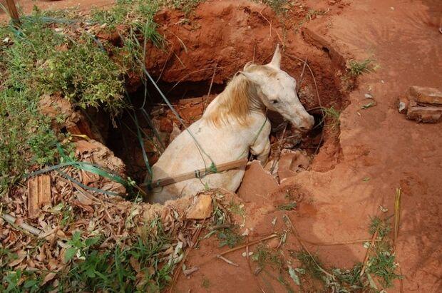 Cavalo cai em fossa e é resgatado pelo Corpo de Bombeiros