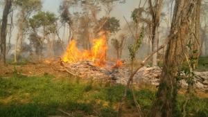 Empresa é autuada por desmatamento, incêndio e exploração ilegal de madeira