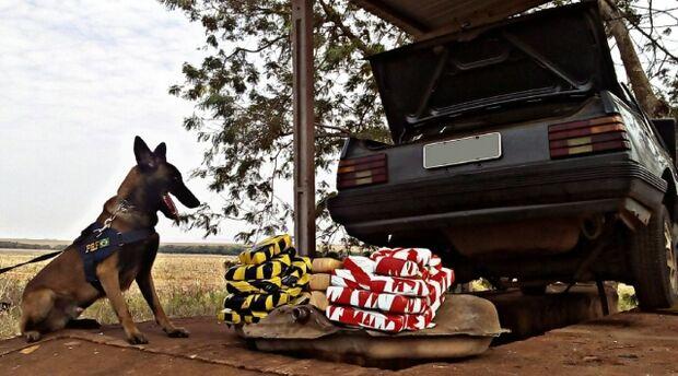 Cão farejador descobre quase 23 kg de maconha em tanque de veículo
