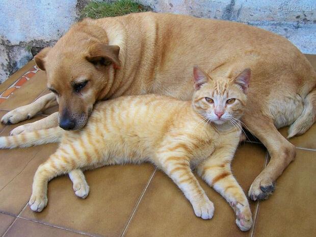 Comissão aprova criminalização de agressões contra cães e gatos