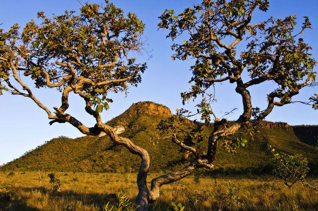 Campanha em defesa do Cerrado quer garantir preservação da água no bioma