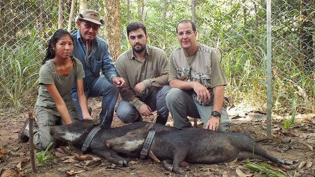 Em MS, fauna silvestre do Pantanal é monitorada com tecnologia GPS