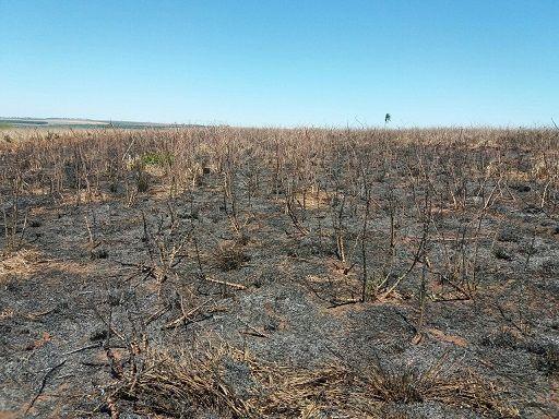 Agricultor é multado em R$ 7 mil por queimar mandiocal sem licença ambiental