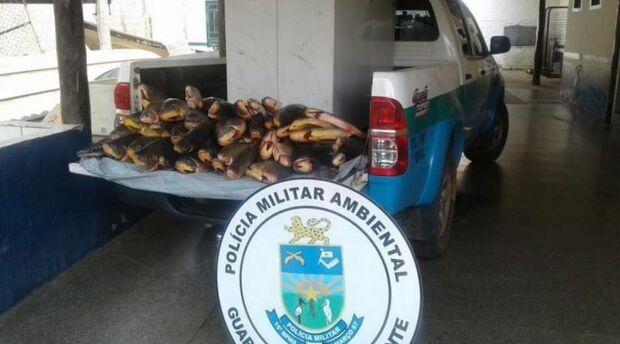 PMA prende quatro paulistas com 100 kg de pescado ilegal