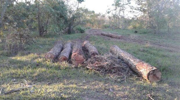 PMA autua proprietário de fazenda por exploração ilegal de madeira
