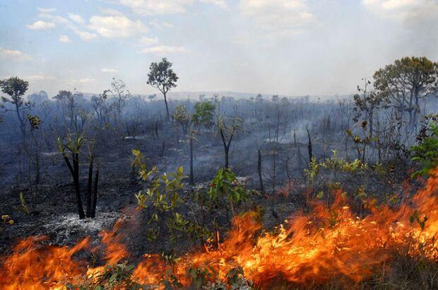 Número de queimadas subiu 40% no primeiro semestre de 2016