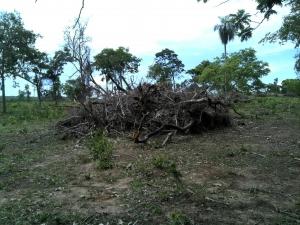 PMA autua proprietário rural em R$ 3 mil