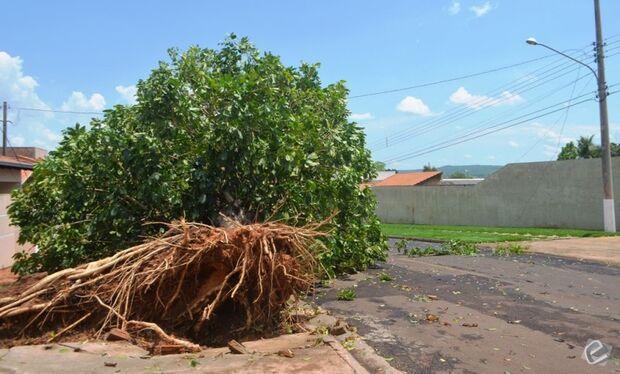 Temporal arranca árvores e provoca estragos em bairros de Coxim