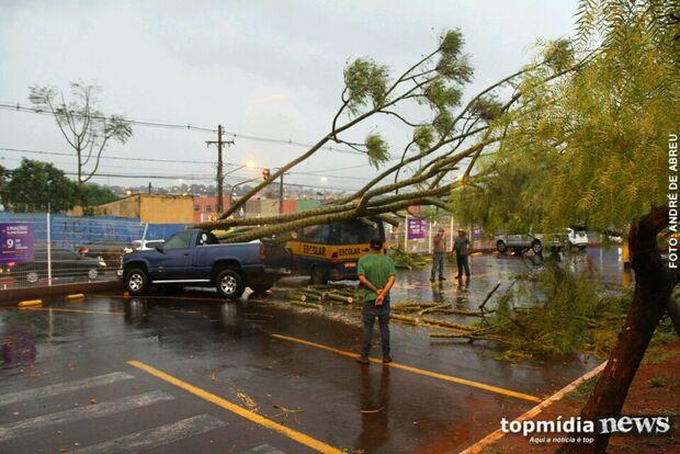 Vento forte derruba árvore sobre dois veículos em estacionamento do Mercadão