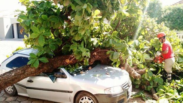 Carro é destruído após árvore de seis metros cair sobre ele na região central