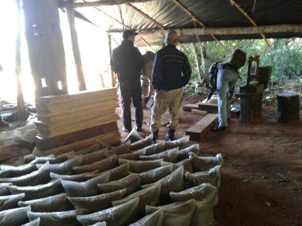 Ação contra o tráfico destrói 21 hectares de cultivo de maconha na fronteira