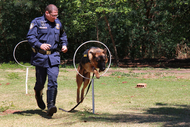 Guardas municipais trocam experiências de adestramento com GCM de São Vicente