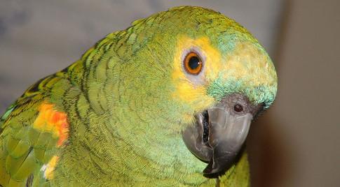 PMA inicia operação 'Dia de Finados' de combate à pesca predatória e tráfico de papagaios